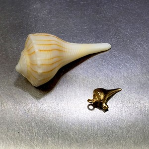 spiral seashell 3d-scanned